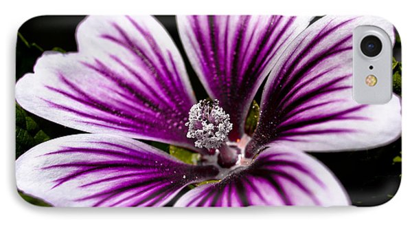 Stripped Blossom IPhone Case by Larry Carr