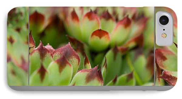 Succulent IPhone Case by Trevor Chriss