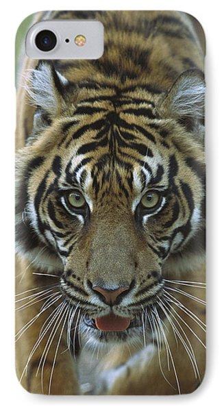 Sumatran Tiger Panthera Tigris Sumatrae Phone Case by Zssd
