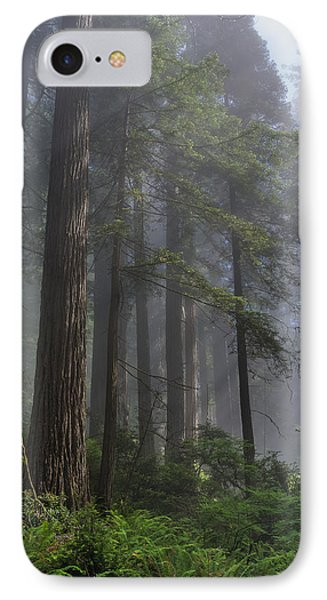 Sun Breaking On Redwoods IPhone Case by Greg Nyquist