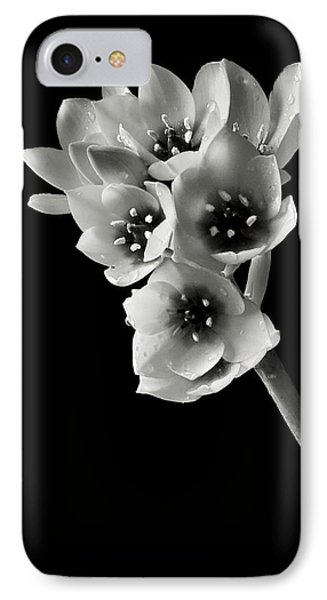 IPhone Case featuring the photograph Sun Star In Black And White by Endre Balogh