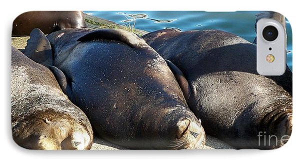 IPhone Case featuring the photograph Sunbathing Sea Lions by Chalet Roome-Rigdon