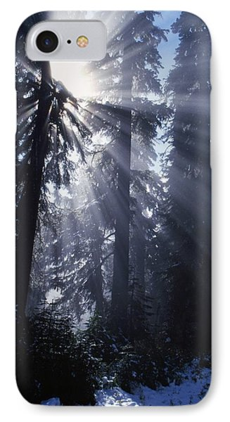 Sunbeams Through Pine Trees Phone Case by Natural Selection Craig Tuttle