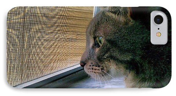 #sunday #cat #kitty #window #gaze Phone Case by Arayon Shaw
