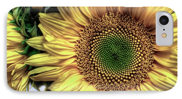 Sunflower 28 IPhone Case by Natasha Bishop
