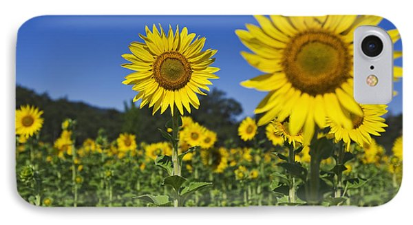 Sunflower Phone Case by Dennis Flaherty and Photo Researchers