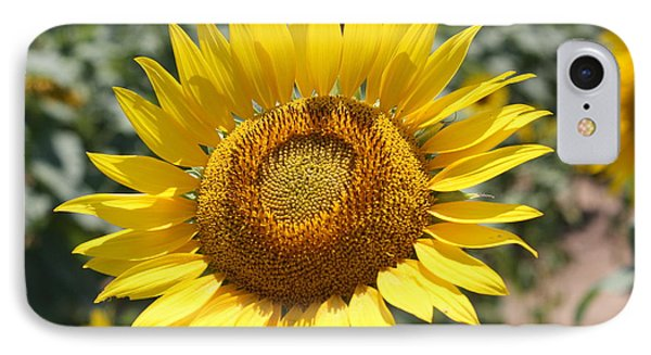 IPhone Case featuring the photograph Sunflower by Donna  Smith
