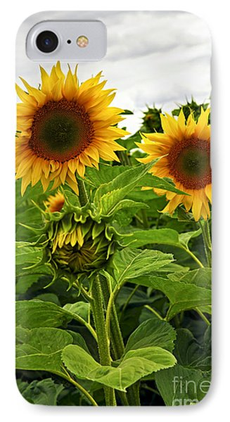 Sunflower Field Phone Case by Elena Elisseeva