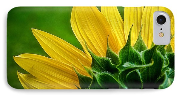 Sunflower IPhone Case by Larry Carr