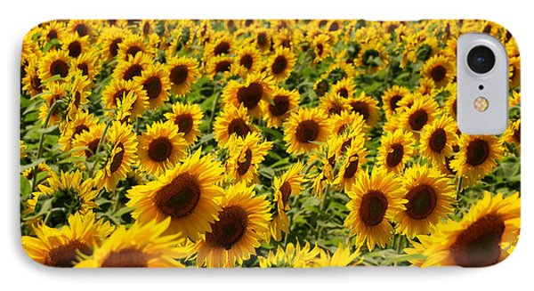 IPhone Case featuring the photograph Sunflower Panorama by Nancy De Flon