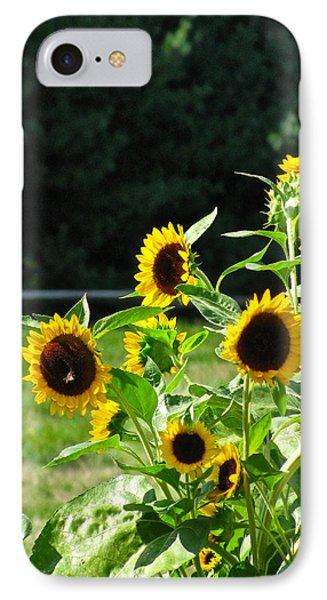 Sunflower Patch Phone Case by Debra     Vatalaro