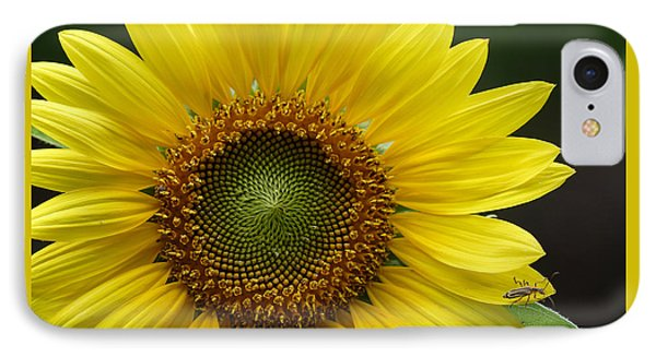IPhone Case featuring the photograph Sunflower With Insect by Daniel Reed