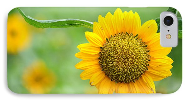 Sunflower IPhone Case by Yew Kwang