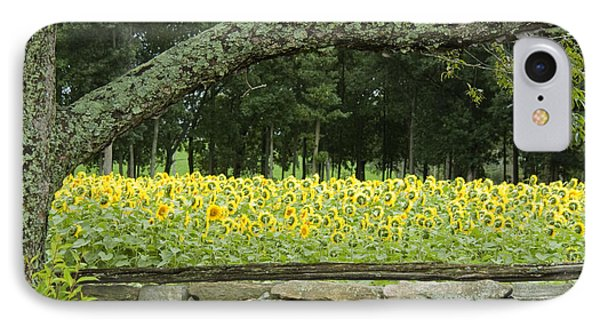 Sunflowers 1 Phone Case by Ron Smith