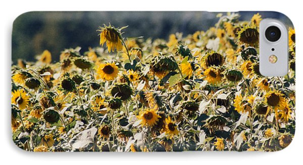 IPhone Case featuring the photograph Sunflowers by Maureen E Ritter