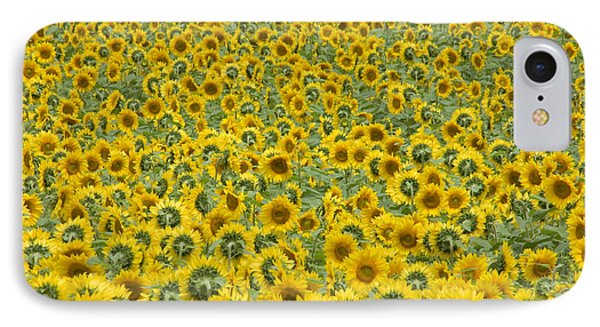 Sunflowers Phone Case by Ron Smith
