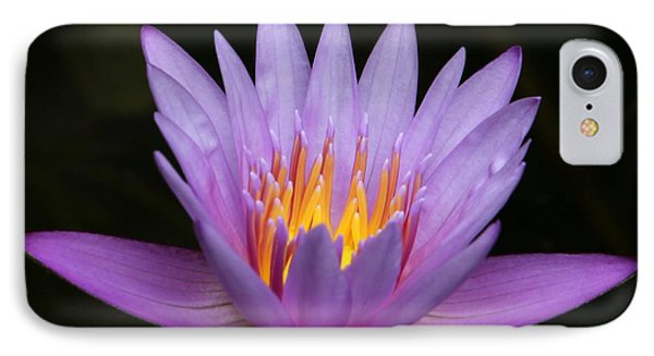 Sunlit Water Lily Phone Case by Sabrina L Ryan