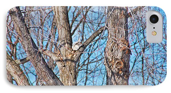 Sunning In The Tree Phone Case by Aimee L Maher Photography and Art Visit ALMGallerydotcom