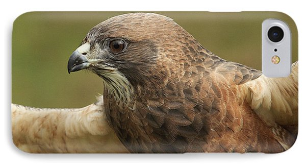 IPhone Case featuring the photograph Swainson's Hawk by Doug Herr