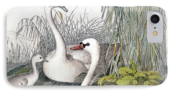 Swans, C1850 Phone Case by Granger