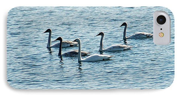 Swans Swimming Phone Case by Aimee L Maher Photography and Art Visit ALMGallerydotcom
