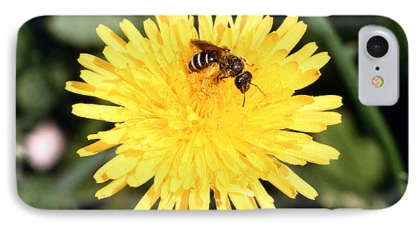 Sweat Bee Phone Case by Science Source