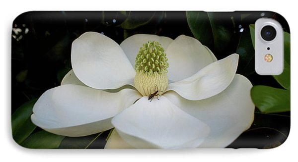 IPhone Case featuring the photograph Sweet Magnolia by Paul Mashburn