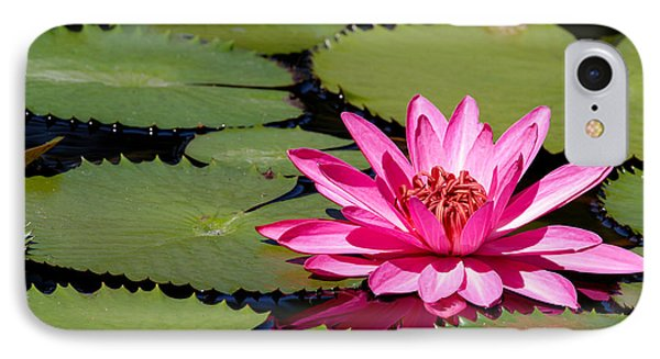 Sweet Pink Water Lily In The River Phone Case by Sabrina L Ryan