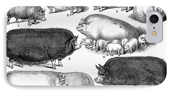 Swine, 1876 Phone Case by Granger