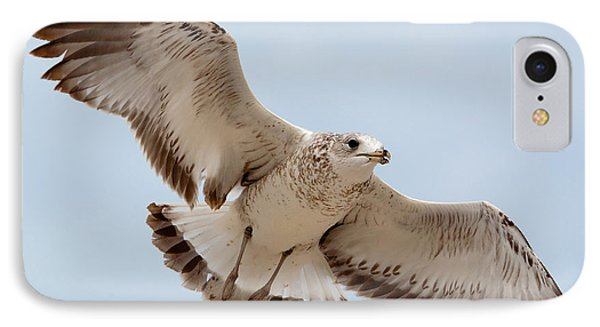 Swooping In For A Meal IPhone Case by Kenneth Albin