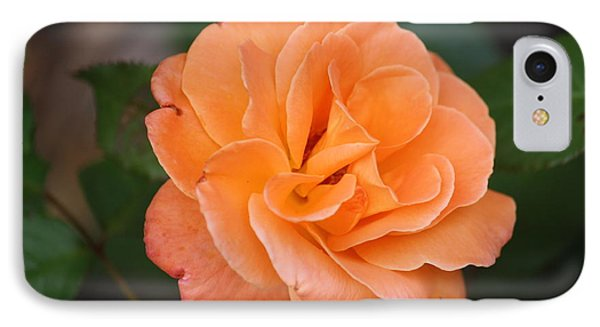 Tangerine Rose IPhone Case