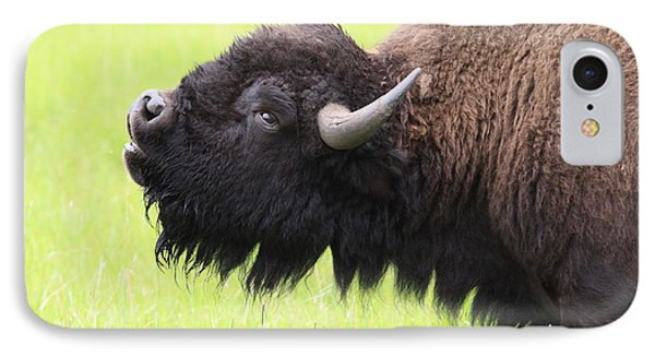 IPhone Case featuring the photograph Tatanka by Kate Purdy