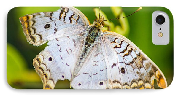 IPhone Case featuring the photograph Tattered Moth by Shannon Harrington