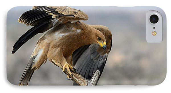 Tawny Eagle Phone Case by Alan Clifford