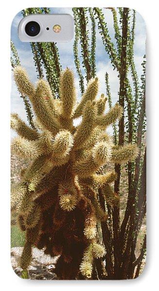 Opuntia Bigelovii iPhone 7 Case - Teddy-bear Cholla Cactus by Peter Falkner