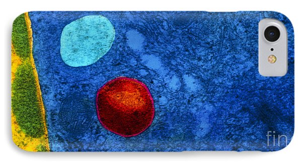 Tem Of Primary Lysosome In Liver Cellsc7036 Phone Case by CNRI and SPL and Photo Researchers