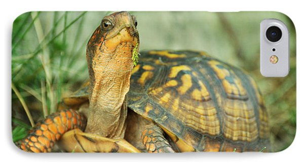 Terrapene Carolina Eastern Box Turtle Phone Case by Rebecca Sherman