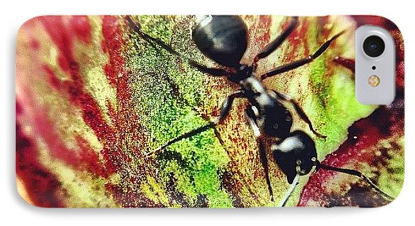 The Ants Have Arrived IPhone Case by Christopher Campbell