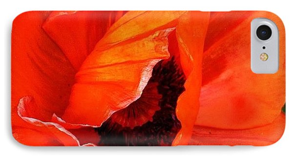 The Beautiful Icelandic Poppy IPhone Case