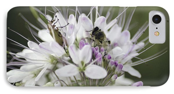 The Beetle And The Bee IPhone Case by Donna Greene