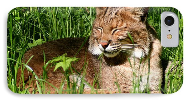 IPhone Case featuring the photograph The Bobcat's Afternoon Nap by Laurel Talabere