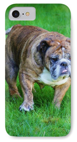 IPhone Case featuring the photograph The Bulldog Shuffle by Jeanette C Landstrom