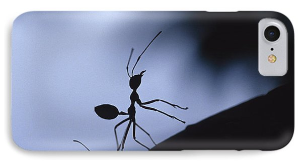 Far North Queensland iPhone 7 Case - The Defensive Silhouette Of A Green by Jason Edwards