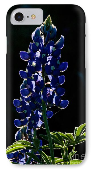 The Glow Of Spring Phone Case by Lisa Holmgreen