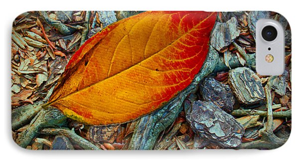The Last Leaf IPhone Case by Barbara Middleton