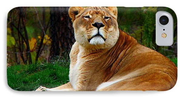 IPhone Case featuring the photograph The Lioness by Davandra Cribbie