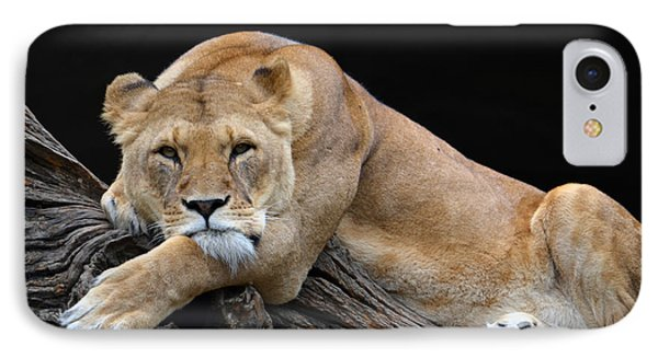 The Lioness Is Watching You Phone Case by Eva Kaufman