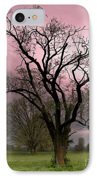 The Old Tree Phone Case by Brian Stamm