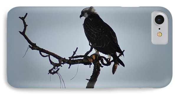 The Osprey IPhone Case by Bill Cannon