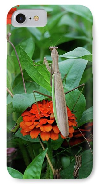 IPhone Case featuring the photograph The Patience Of A Mantis by Thomas Woolworth